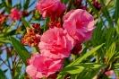 Rödelsee Blume